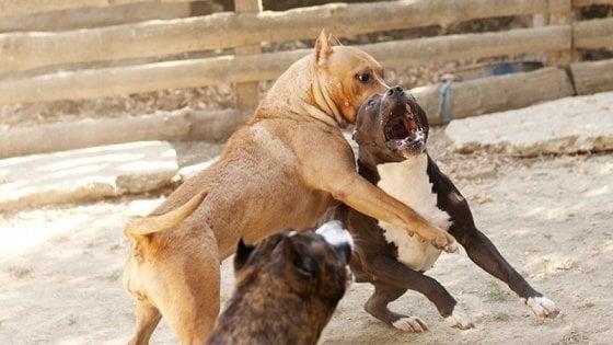 """Zoomafie, Lav: """"Una denuncia ogni 55 minuti per reati contro gli animali"""""""