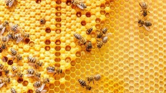 Il potere delle api: lo studio del miele per difendere gli ecosistemi