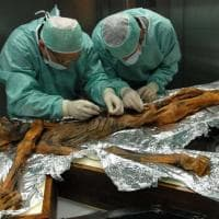 Stambecco, cereali e felci, l'ultimo pasto di Ötzi