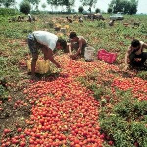 Serge e gli altri schiavi dei campi, in agricoltura 4 su 10 lavorano in nero