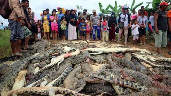 Papua, massacrano 292 coccodrilli per vendicare l'amico sbranato