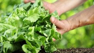 Ritorno alla terra (e voglia di evasione): in Italia è boom di orti in affitto