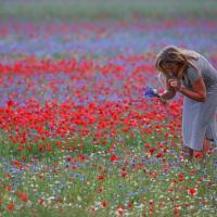 Castelluccio, il Pian Grande come una tavolozza: i mille colori della fioritura