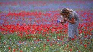 Lo spettacolo della fioritura,Castelluccio torna a sbocciare