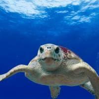 Arriva il pronto soccorso in spiaggia per aiutare le tartarughe