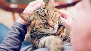 """Gatti che non danno allergie grazie al """"copia e incolla"""" del Dna"""