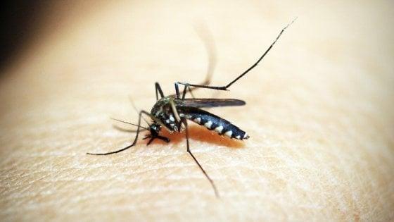 Malaria, arriva il farmaco contro le recidive