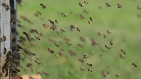 Api, vespe e calabroni: un pericolo che colpisce 5 milioni di italiani ogni anno