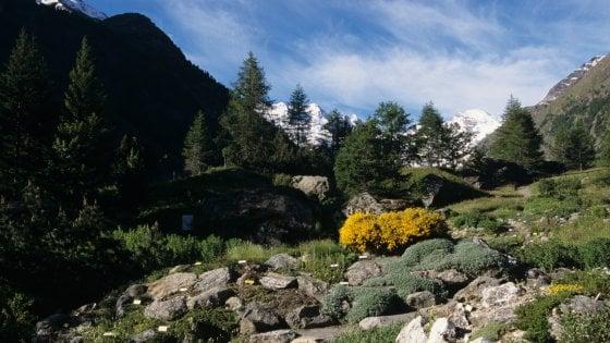 """Un orto """"nobile"""" a quota 2mila: dal Bianco alla Jungfrau a scoprire i giardini botanici alpini"""