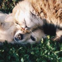 Cane e gatto possono essere ottimi
