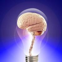 Riprodotto in laboratorio il primo mini cervello umano completo