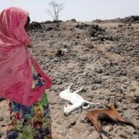 Fao,  gli interventi tempestivi hanno ridotto l'impatto della siccità