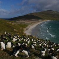 """Mare """"selvaggio"""": ecco le oasi che rischiano di scomparire"""
