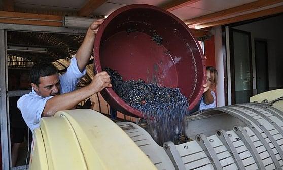 Un filo colorato che porta in Sardegna: così la natura entra nel vino