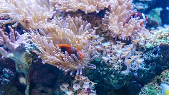 Un'oasi intatta di coralli tra le Filippine e la Nuova Guinea