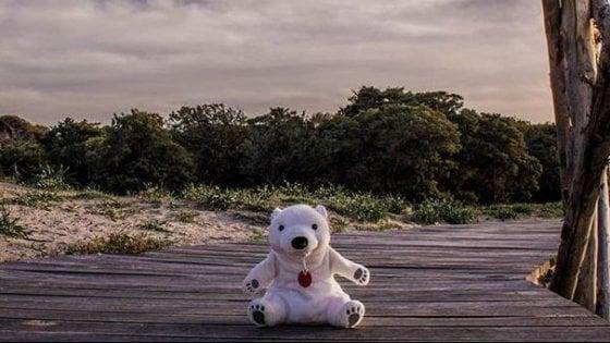 """""""Giro il mondo con un orso di peluche per mostrare la fragilità della natura"""": la sfida di Andrea"""