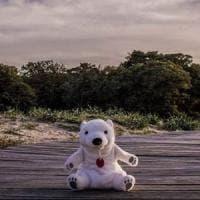 """""""Giro il mondo con un orso di peluche per mostrare la fragilità della natura"""": la sfida di..."""