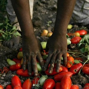 Così si combatte il caporalato: storie di chi nei campi coltiva la speranza