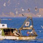 Pesce di allevamento per fronteggiare il fermo pesca