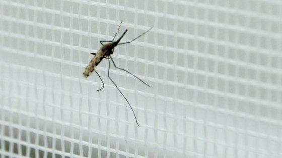 La sfida delle nuove reti anti-zanzara contro la malaria
