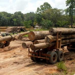 Pesca selvaggia e deforestazione, al 70% responsabili le società nei paradisi fiscali