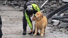 I cani eroi che aiutano a trovare superstiti