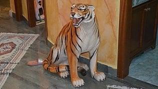 Wc d'oro e tigri in ceramica: le ville del clan Casamonica foto