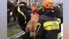 Con il cane in spalla: così i pompieri tra le macerie