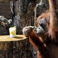 Difendiamo l'orango, domenica è la sua giornata