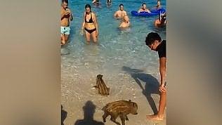 Sorpresa in spiaggia: i cuccioli di cinghiale fanno il bagno