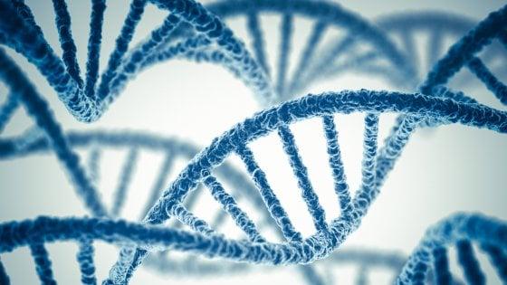 """Il genoma umano si """"restringe"""", ha meno geni del previsto"""