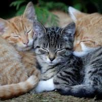 Nuova Zelanda, il paese vietato ai gatti.