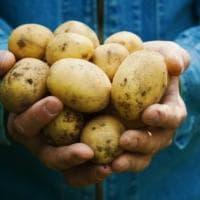 Regione che vai patata che trovi: e per ogni varietà tanti sapori da scoprire