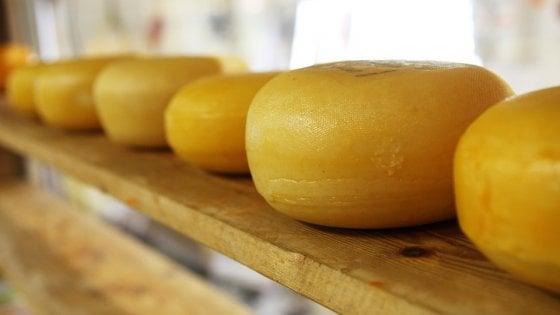 Un formaggio 'stagionato' di 7 mila anni: è il più antico del Mediterraneo