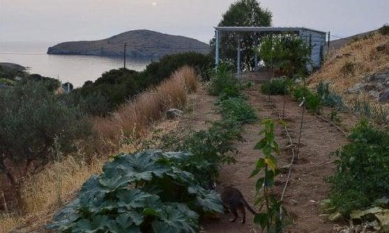 'Accarezzatore' di gatti in un'isola greca? In un mese 35mila curriculum (da 83 Paesi diversi)