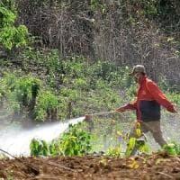 Pesticidi, 26 milioni di avvelenati ogni anno concentrati nel Sud del mondo