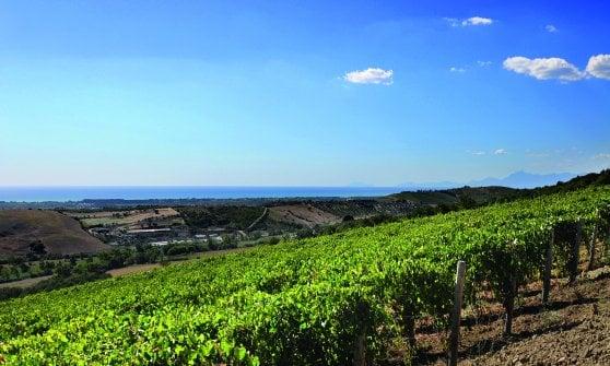 Paestum, una storia di terra, coraggio e impresa: Peppino Pagano tra vini, mozzarelle e ristoranti