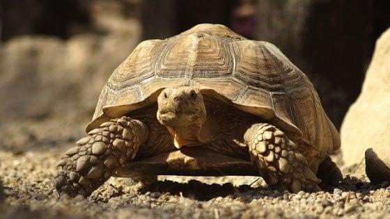 Centinaia di specie a rischio: così l'estinzione delle tartarughe comprometterà l'ecosistema