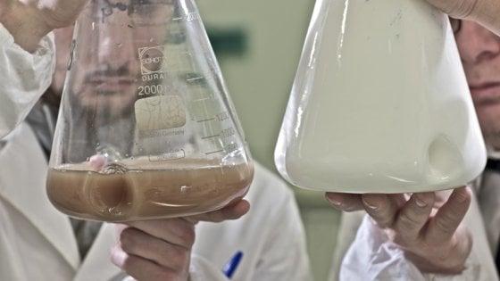 """Olio di frittura e batteri: """"Ecco la nostra bioplastica"""""""