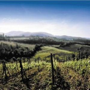 Veneto, troppa l'uva raccolta: svenduta online