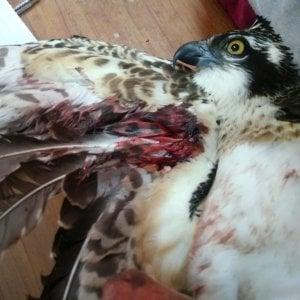 Parte la caccia in tutta Italia, allarme bracconaggio