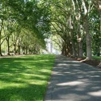 Vivere nei quartieri verdi migliora la memoria dei bambini