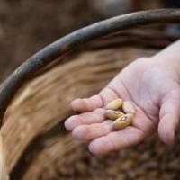 Dal pesto friulano al riso gigante: la carica dei nuovi presidi Slow food (italiani)