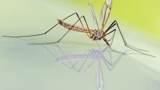"""Lo studio: """"Non solo nei mari: insetti contaminati da microplastiche"""""""