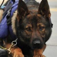 Kenya, flop all'aeroporto: i cani antidroga non trovano la droga