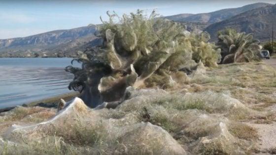 In Grecia una gigantesca ragnatela ricopre l'intera spiaggia