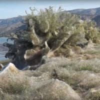 Un'enorme ragnatela ha ricoperto la costa greca