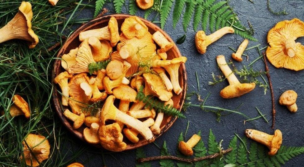 Con l'autunno arrivano  i funghi: un decalogo (e tre app) per andare nei boschi