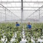 Agricoltura, i prodotti dimenticati valgono 10 miliardi