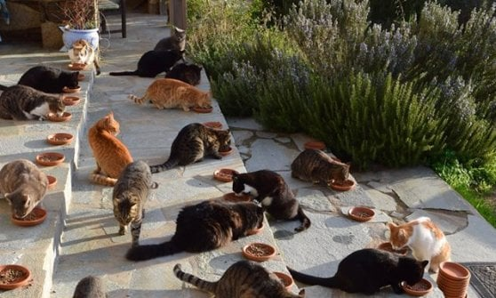 Grecia, l'isola di Syros ha trovato un'accarezzatrice di gatti. Ma c'è un'altra posizione aperta